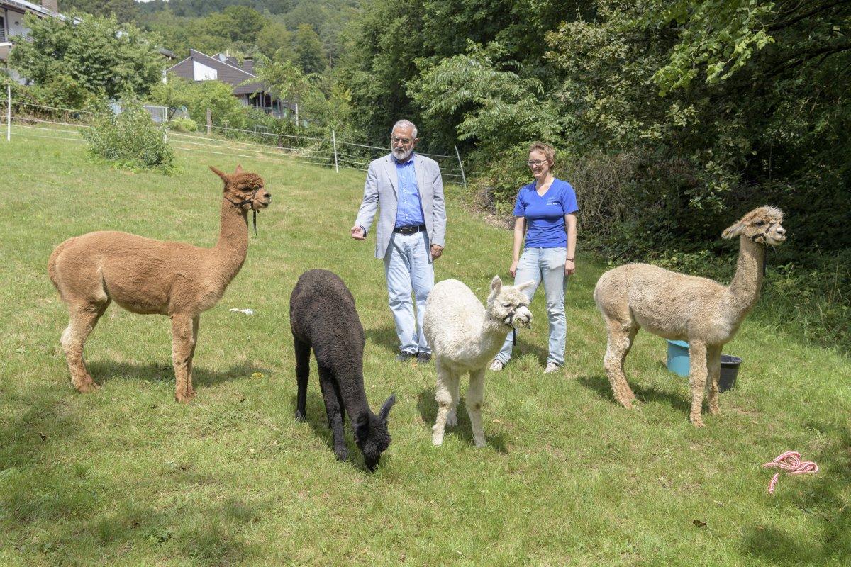 Heidelberg: Bürgermeister Erichson besuchte bei seiner Sommertour die Alpakafarm Hirtenaue in Ziegelhausen