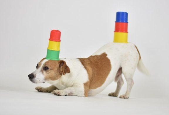 Mannheim: beliebten Hundeevents auf 5000 Quadratmetern