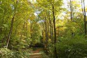 Weinheim: Auf zu den Mammutbäumen