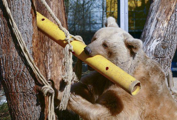 Kisten, Röhren, frische Äste: Was sorgt für Abwechslung bei den Tieren im Zoo Heidelberg?