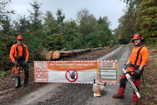Forstbezirk Odenwald begrüßt acht engagierte neue Lehrlinge in schwieriger Zeit