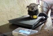 Sparkasse Heidelberg unterstützt Artenschutz und Artenvielfalt – Spende an den Zoo Heidelberg
