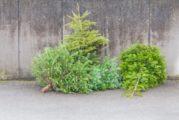 Weihnachtsbäume können im Wertstoffhof Heidelberg-Rohrbach abgegeben werden
