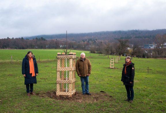 Auf den städtischen Streuobstwiesen werden  90 neue Bäume gepflanzt Wichtiger Schritt zur Erhaltung der Heidelberger Obstbaumbestände