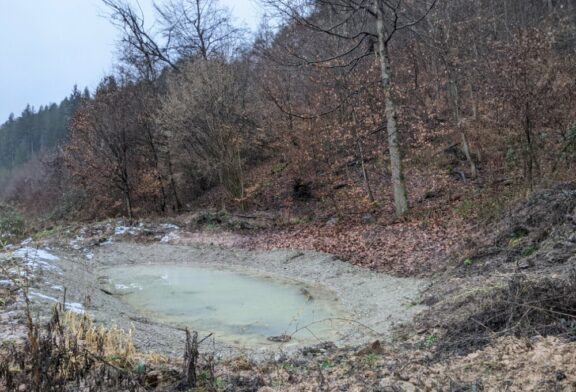 Kreisforstamt: Zwei Schülerinnen des Max-Born-Gymnasiums betreuen ein Biotop im Unteren Stadtwald in Neckargemünd