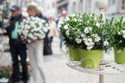 Verkaufsoffener Sonntag am 12.9. in Weinheim