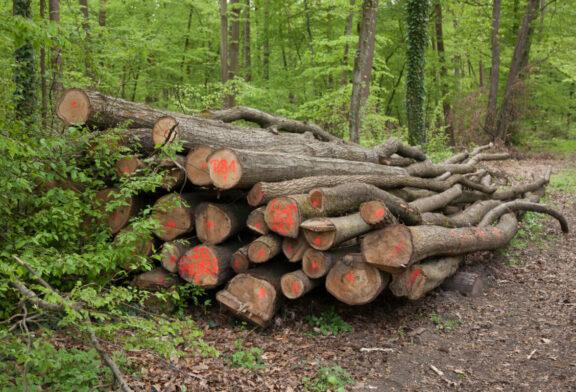 Die Brennholzsaison beginnt