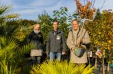Klimaschutz-Aktion der Stadt Heidelberg: 500 Gratis-Obstbäume für Bürgerinnen und Bürger